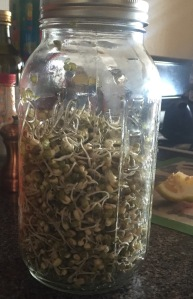 Success! Ready-to-Eat home sprouted organic Mung Beans.